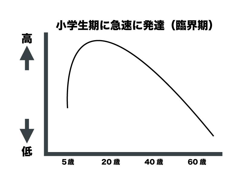 スポーツビジョン発達の様式図