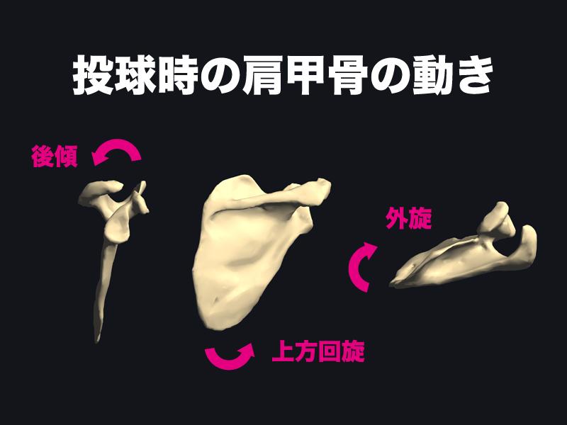 投球時の肩甲骨の動き